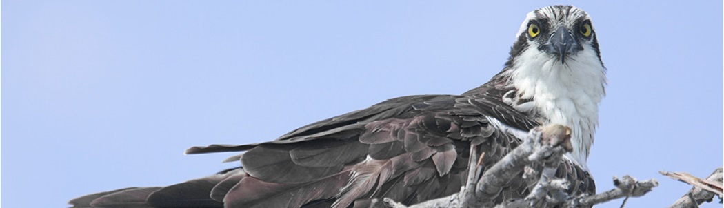 21-106.5_Osprey_Blog_Banner-PP