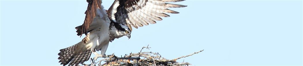 Osprey_blog-pg-header_940w