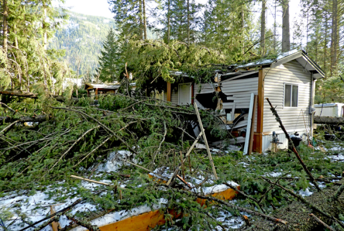 Trees brought down by windstorm