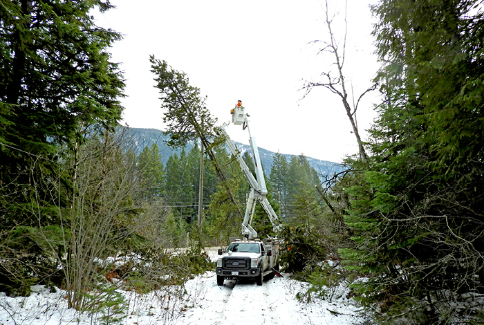 Crews working to remove compromised trees along a Kootenay side road.