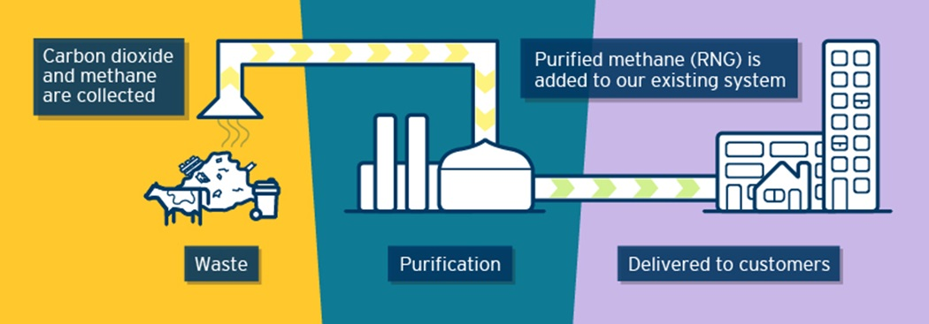 Illustration showing waste emitting CO2 and methane. The CO2 and methane is collected and purified to create Renewable Natural Gas, which is delivered to customers via FortisBC's existing natural gas system.