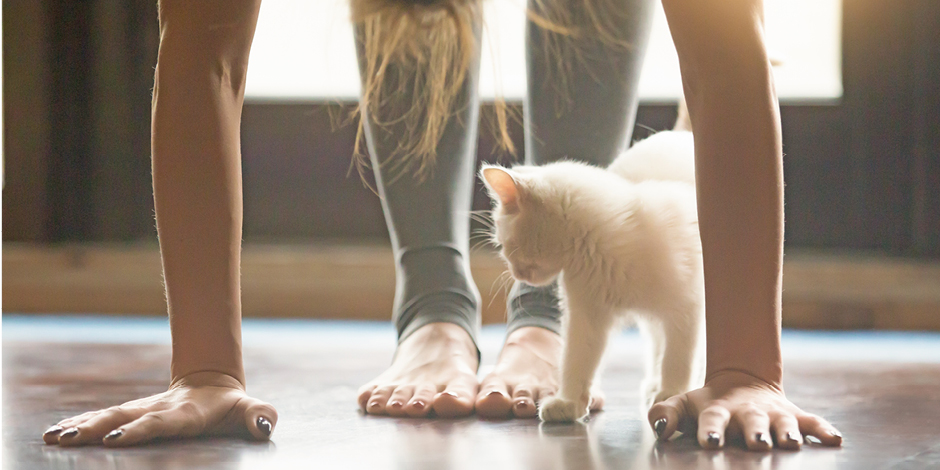 Person stretching with a cat