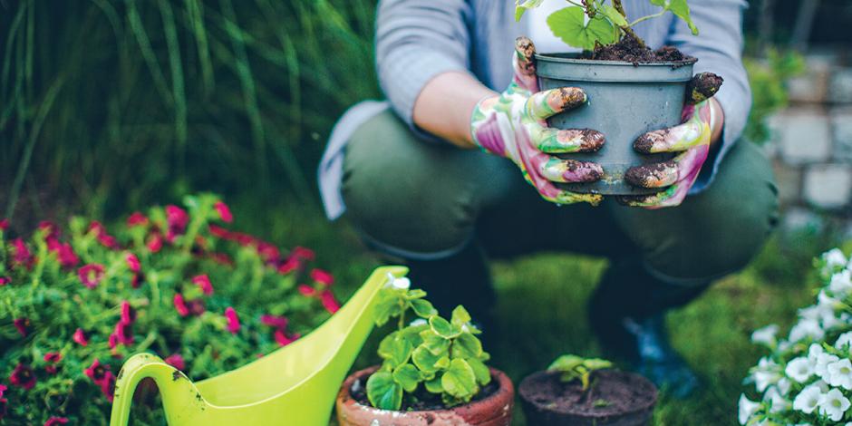 Person gardening