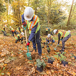 FortisBC employees planting several hundred trees and bushes at the Stoney Creek Trail System in Burnaby. (19-067)